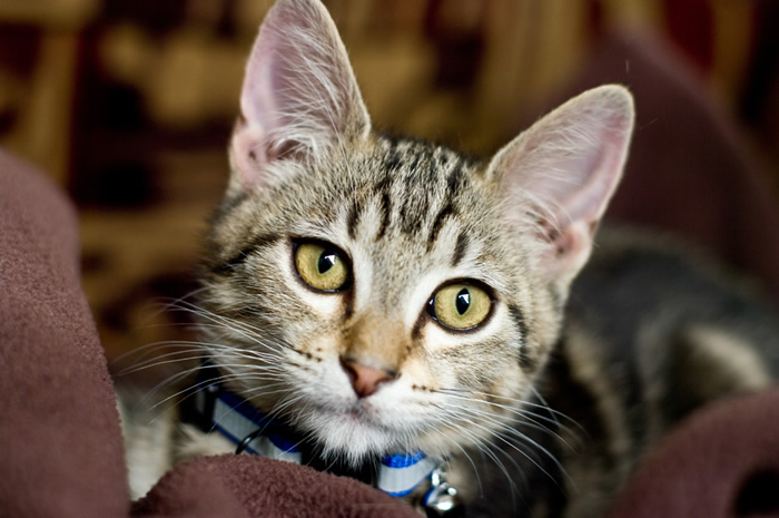 cute-cat