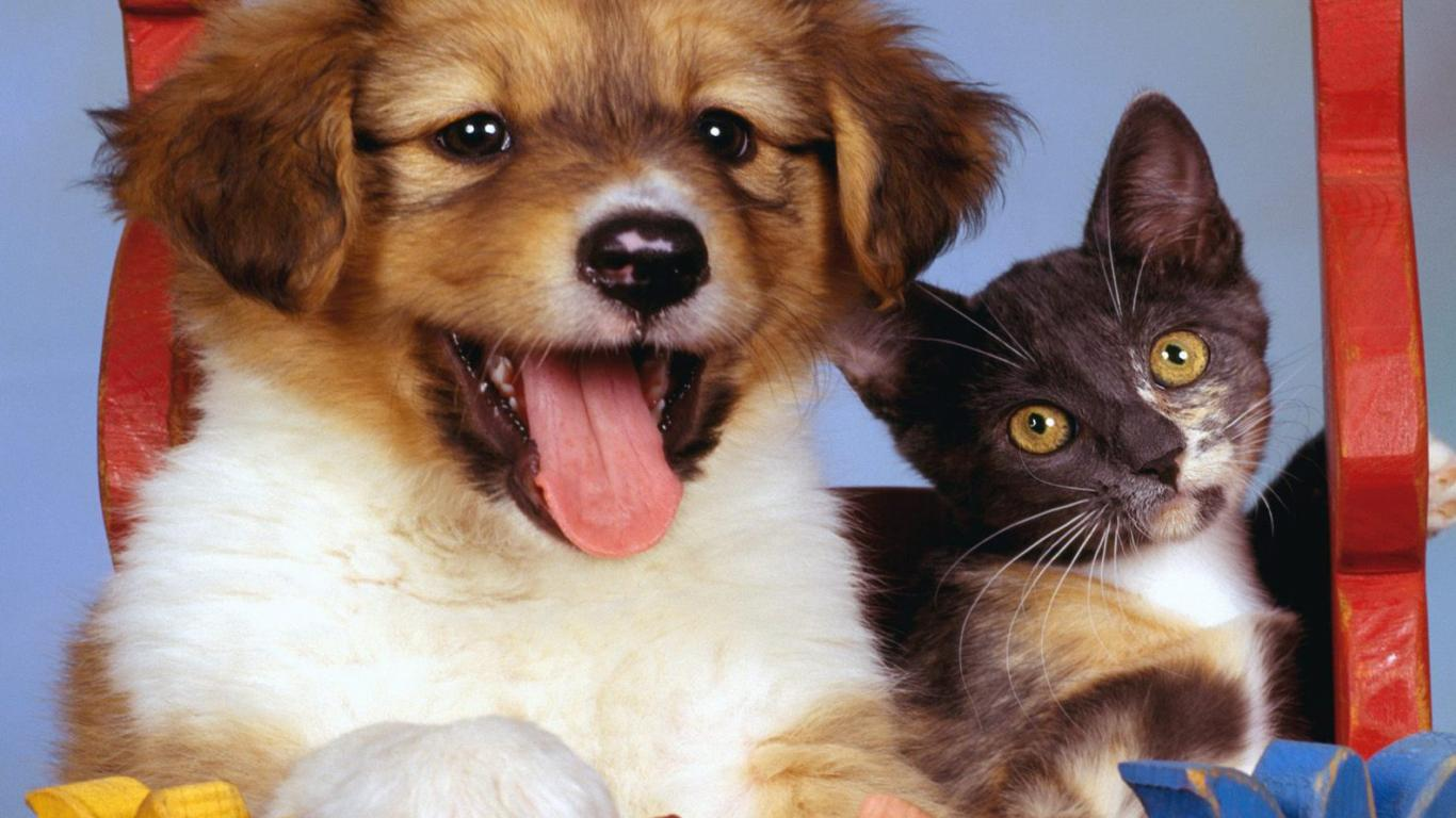 dog-and-cat-pictures-free-download